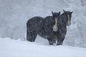 Film Still MARA MARA von David Aguilar Iñigo; zwei Pferde stehen im Schneetreiben